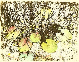 lillies - van dyke with water colour 1985