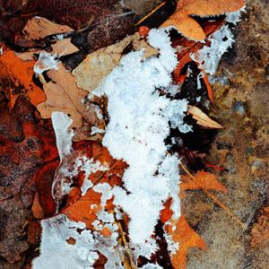 11dec16_autumn ice on leaves